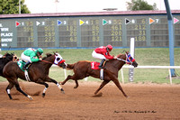 Race 5 Speedhorse Gold and Silver Cup Derby Trials. 350 yards. July 19, 2013